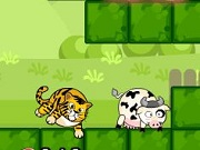 Tiger Eats Cow